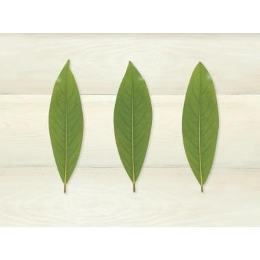 Tấm trải bàn ba lá (45x30)cm Nuova