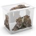 Hộp nhựa chứa đồ C-Box Style Wild XL có bánh xe KIS - Ý